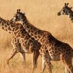 Safari en África entre Marrueco, África del sur y Madagascar